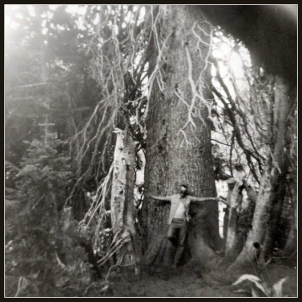 Giant Spruce in Bloomington Canyon